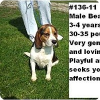 Adopt A Pet :: # 136-11 @ Animal Shelter - Zanesville, OH