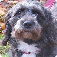 Adopt A Pet :: Eloise - Brattleboro, VT