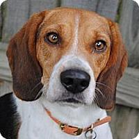 Adopt A Pet :: Sean - Novi, MI