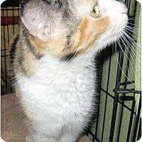 Adopt A Pet :: Jolene - Catasauqua, PA