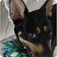 Adopt A Pet :: Kix - Cleveland, OH