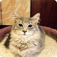Adopt A Pet :: Roxanne - Delmont, PA