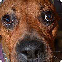 Adopt A Pet :: Nala - Scottsdale, AZ