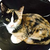 Adopt A Pet :: Minx - North Ogden, UT