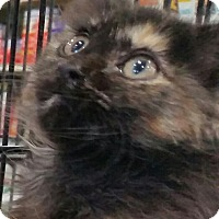 Adopt A Pet :: Rowena - Harrisburg, NC