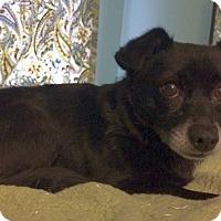 Adopt A Pet :: Davis - Knoxville, TN