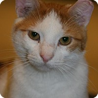 Adopt A Pet :: Marty - Philadelphia, PA