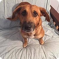 Adopt A Pet :: Bo - Tomah, WI