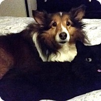 Adopt A Pet :: Angel (2) - Mission, KS
