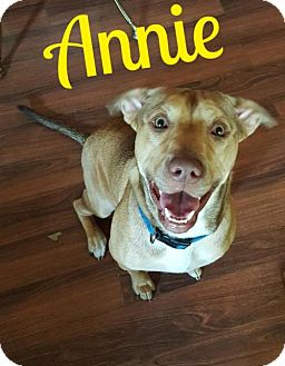 Terrier (Unknown Type, Medium)/Labrador Retriever Mix Dog for adoption in Cantonment, Florida - Annie