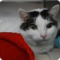 Adopt A Pet :: Oak - Elyria, OH