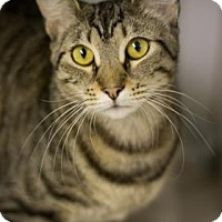 Adopt A Pet :: Manhattan - Bradenton, FL