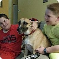 Adopt A Pet :: Blondie - Homestead, FL