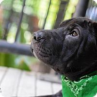 Adopt A Pet :: Butler - Baton Rouge, LA