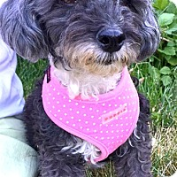 Adopt A Pet :: Lexie-ADOPTION PENDING - Boulder, CO