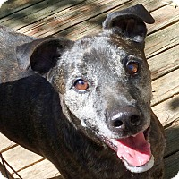 Adopt A Pet :: Tiger - Olive Branch, MS