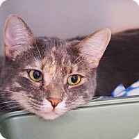 Adopt A Pet :: Hope - Lincoln, NE