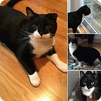 Adopt A Pet :: Jack - bridgeport, CT