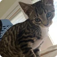 Adopt A Pet :: Bluebell #4 - Lunenburg, MA