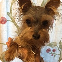 Adopt A Pet :: Pete - Kansas city, MO