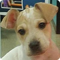 Adopt A Pet :: Becky#4F - Orlando, FL