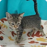 Adopt A Pet :: Cocoapuff - Mt. Vernon, IL