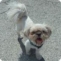 Adopt A Pet :: Ronnie - Lockhart, TX