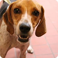 Adopt A Pet :: Gus - Daytona Beach, FL