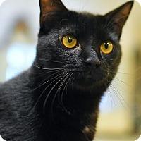 Adopt A Pet :: Zoysite - Aiken, SC