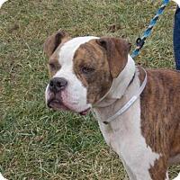 Adopt A Pet :: Tanner - Batavia, OH
