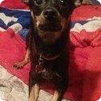 Adopt A Pet :: AURA - Hampton, VA