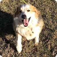 Adopt A Pet :: Bernice - Mechanicsburg, OH