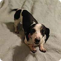 Adopt A Pet :: Elbee - Pearland, TX