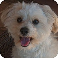 Adopt A Pet :: Tommy - La Costa, CA