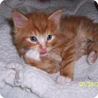 Adopt A Pet :: Tropicana - Island Park, NY