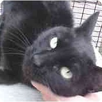 Adopt A Pet :: Blackie Pearl - Lunenburg, MA