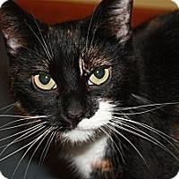 Adopt A Pet :: Precious (LE) - Little Falls, NJ