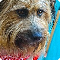Adopt A Pet :: LIzzy - san diego, CA