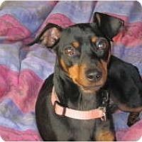 Adopt A Pet :: Cammie - Nashville, TN