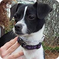 Adopt A Pet :: Wiggles - Athens, GA