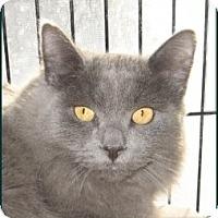Adopt A Pet :: Mouse - Galloway, NJ