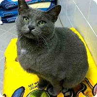 Adopt A Pet :: GHOST - Canfield, OH