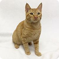 Adopt A Pet :: Kevin - Mission Viejo, CA
