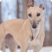 Adopt A Pet :: E's Elizabeth Kn - Gerrardstown, WV