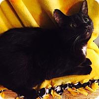 Adopt A Pet :: Reyna - Addison, IL