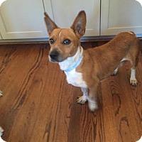 Adopt A Pet :: Esme - Houston, TX