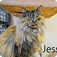 Adopt A Pet :: Jesse - Hamilton, MT