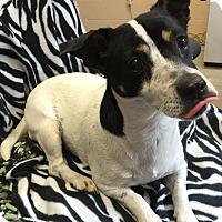 Adopt A Pet :: Tonga - Sparta, NJ