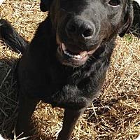 Adopt A Pet :: Braum - E. Greenwhich, RI