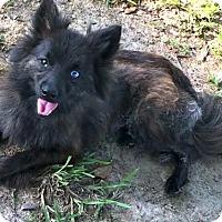 Adopt A Pet :: Renagade - Brunswick, ME